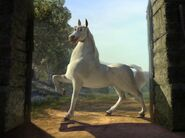 Donkey as a stallion