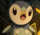 Verity's Piplup