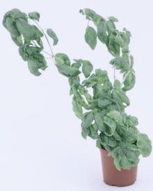 PlantSick