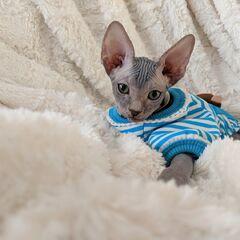 Pi as a kitten.