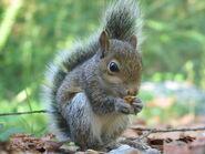 Animal Items - Squirrel