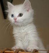 Animal Items - Cat