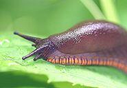 Animal Items - Slug