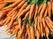 Headance - Carrot Nose