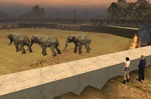 ElephantRanch