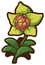 File:Green Orchid.png