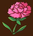 File:Pink Carnation.png