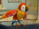Bernie the Parrot