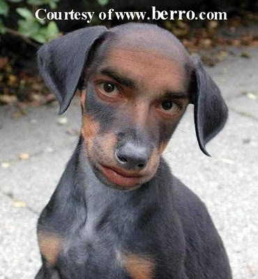 Funny dog man picture