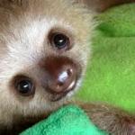 Sloth8