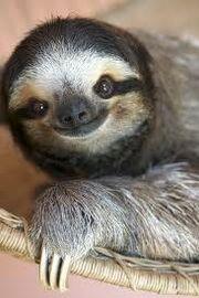 Sloth9