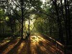 Isla Inferno Woods