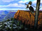Grand-canyon-lookout-harold-shull