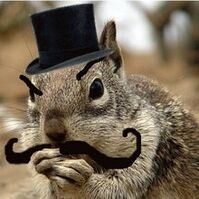 Dastardly-Squirrel
