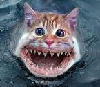 Catfhish!!!!!!!!!!!!