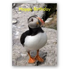Birthdaypuffin