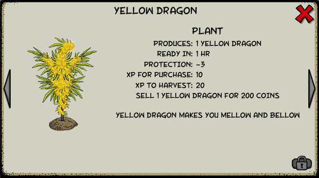 Yellow dragon plant
