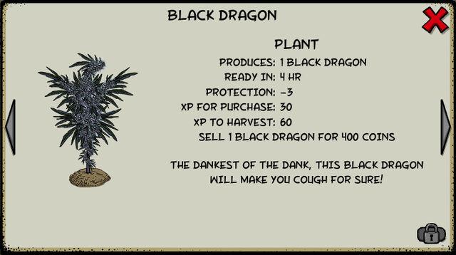 File:Black dragon plant.jpeg