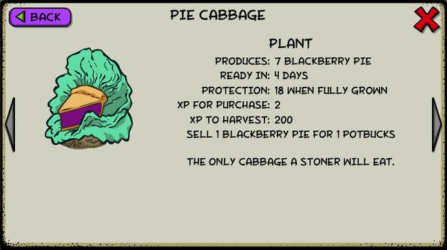 Pie cabbage
