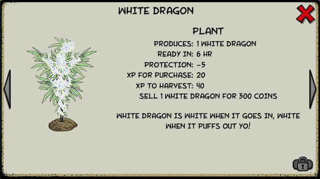 File:White dragon plant.jpeg