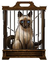 Siamese-cat-lrg