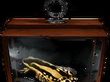 Harlequin Toad