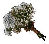 Valerian-sprigs-lrg