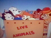 Thunderhawk and the Pound Puppies