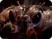 Prlg-vils-scorpius