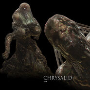Chrysalid
