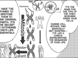 Telomere Regeneration