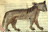 A Crocotta as illustrated in a medieval bestiary