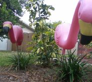 SCP-1507 - Pink Flamingos (SCP Foundation)