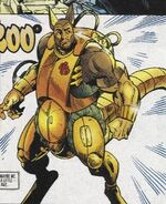 Kangaroo Marvel
