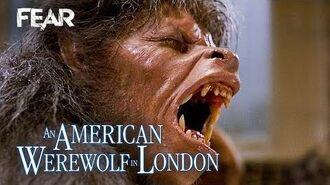 Iconic Wolfman Transformation Scene An American Werewolf In London