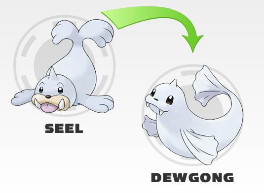 File:Seel and Dewgong.jpg