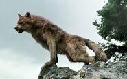 Werewolf-jacob-black-9197526-600-400