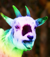 SCP-2576 - Joseph and the Technicolor Dream Goat (SCP Foundation)