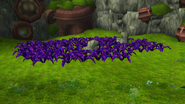 Dark plants from TPL