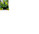 Parasaurzord