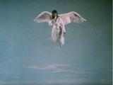 Ep. 16: The Girl Who Had Wings!