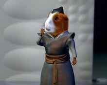 Sensei hamster
