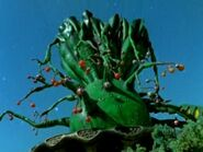 Jade-Gladiator-Tree-300x225