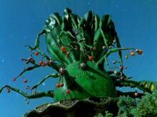 Jade-Gladiator-Tree-300x225