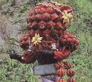 General Cactus