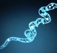 Kyuranger's Hydra Constellation