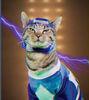 Blue Meower Ranger