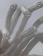 PRMF-Hydra Worm