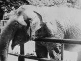 Słonica Kinga