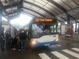 Linia autobusowa nr 501